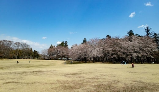 【埼玉県農林公園】ミニSLや食事が楽しめる!子連れで遊べるおでかけスポット