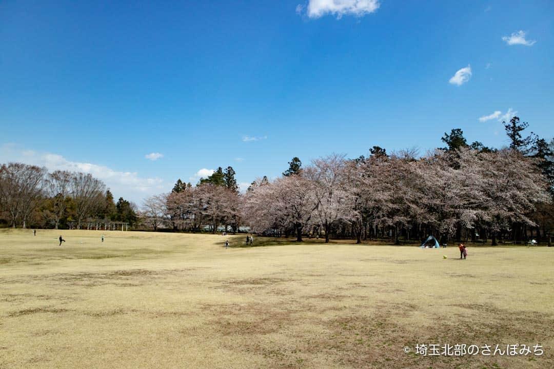 農林公園広場と桜