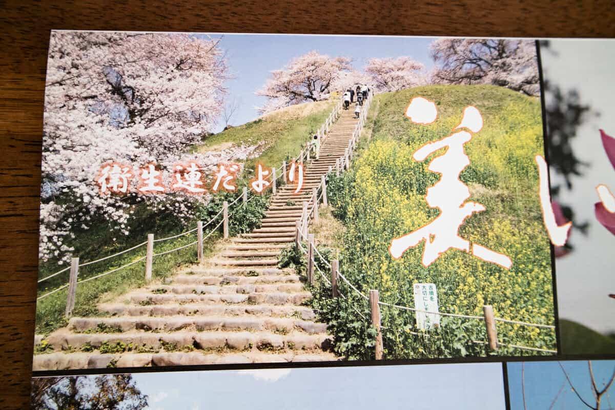行田「美しいまち」桜の写真