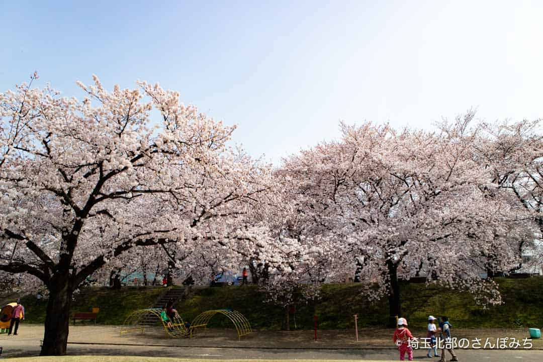 熊谷・万平公園の桜と遊具
