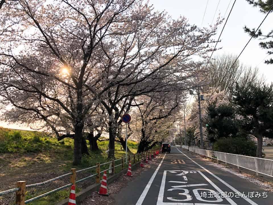 熊谷桜堤の荒川公園前(2020)