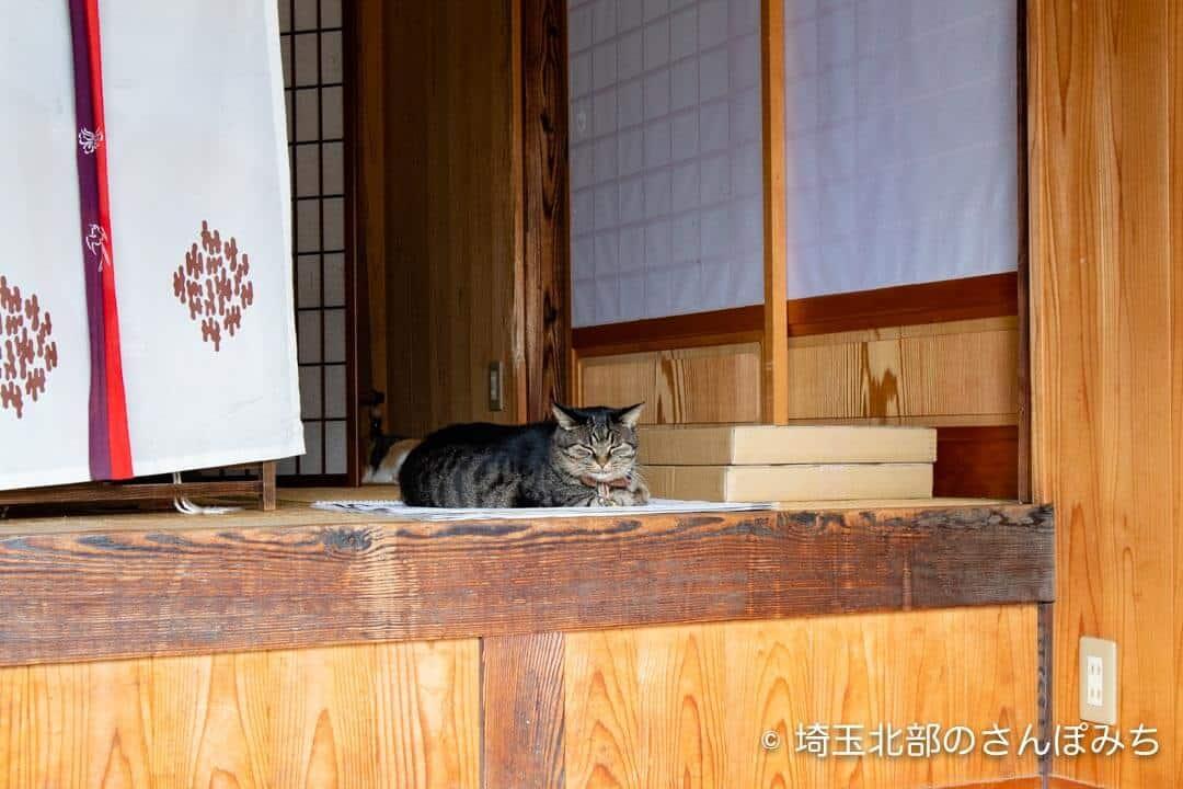 前玉神社の猫(きなこ)