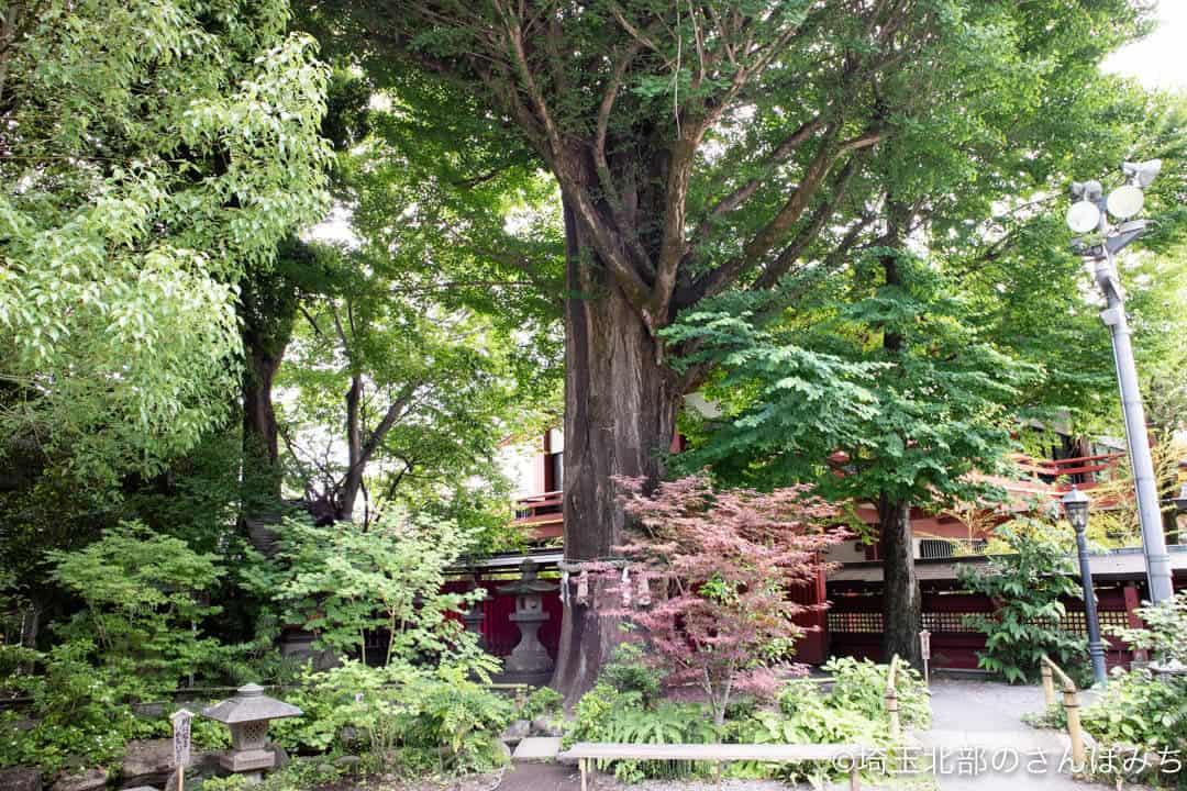 秩父神社の御神木