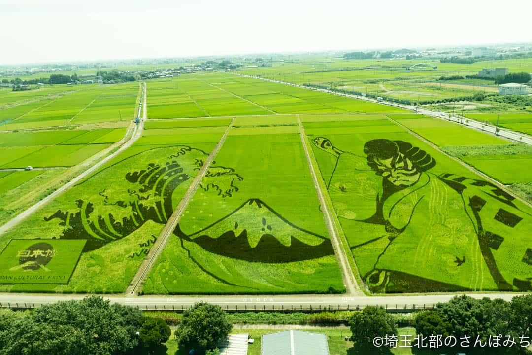 行田市古代蓮会館展望タワーからの田んぼアート(2021年)