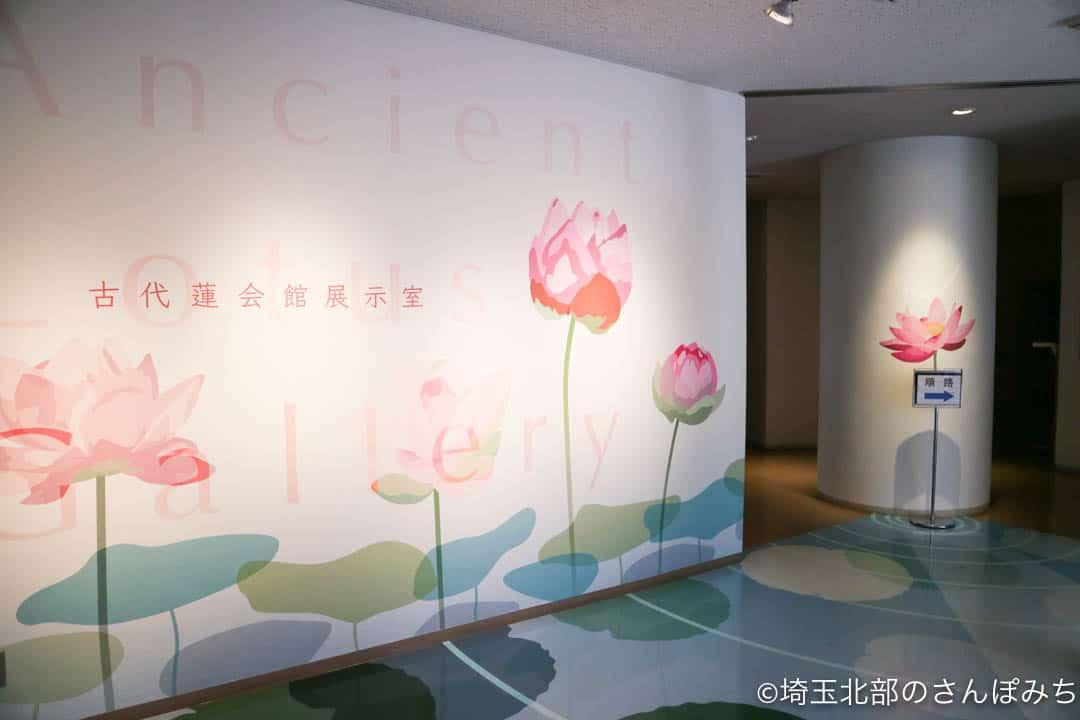 行田市古代蓮会館の展示室入口