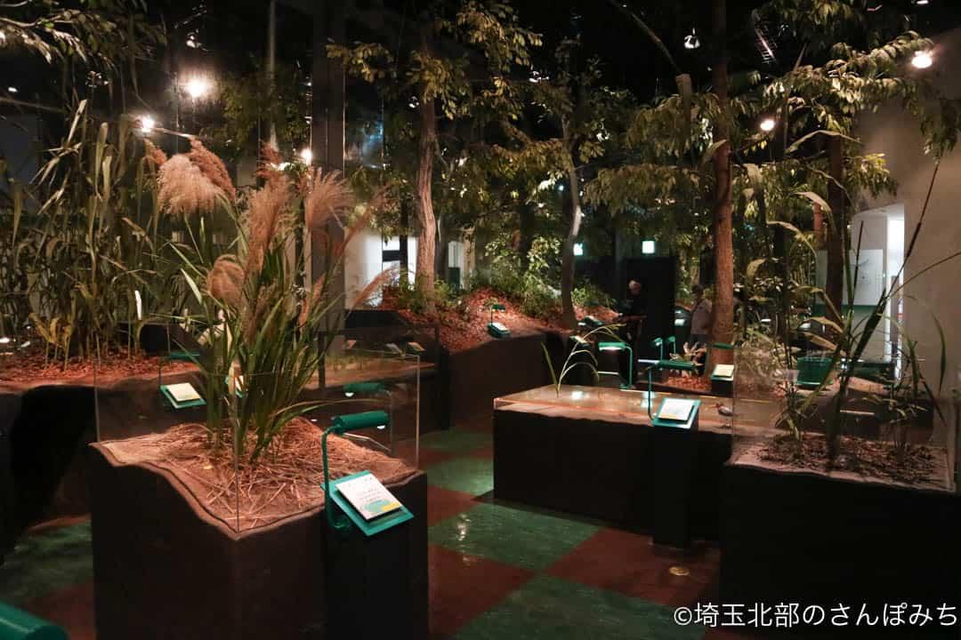 行田市古代蓮会館の展示室