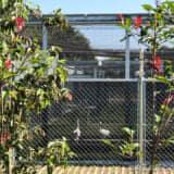 鴻巣市コウノトリ野生復帰センターが完成!コウノトリが飼育施設の展示も